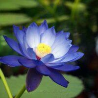 guided meditation for awakening