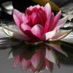 Thursday Morning Guided Meditation